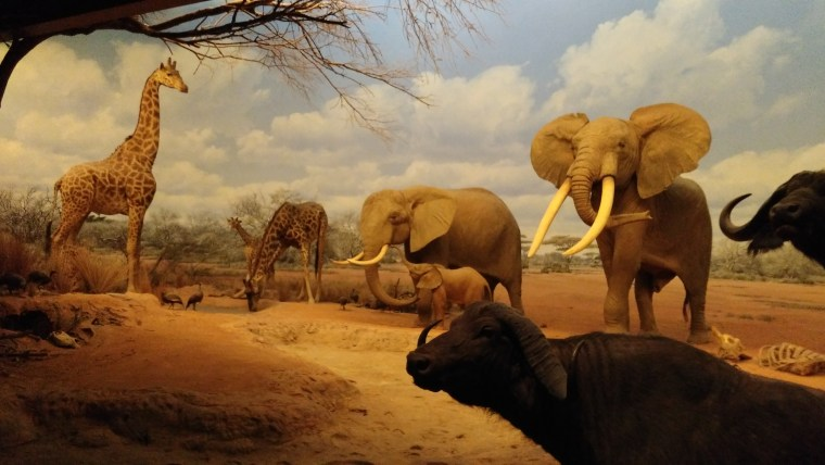 Post 74 African Mammal Hall
