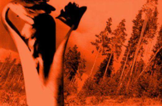 slantingtrees&boyplantorangeblur 370430292[H]