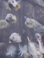 plant boy_fish eyes