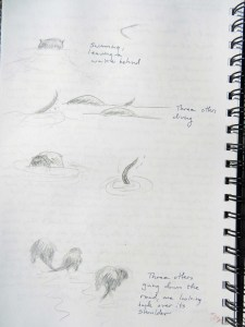 Otters 053117