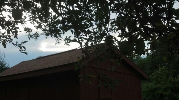 Apples and shed