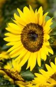 MelissaJoyBlogs_FlowerPower_051917_01