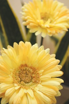 MelissaJoyBlogs_FlowerPower_051917_06