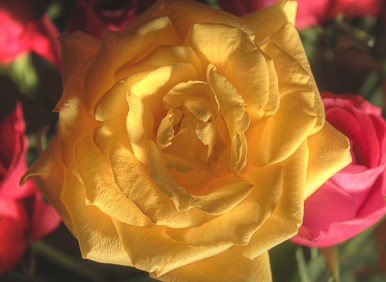 MelissaJoyBlogs_FlowerPower_051917_13