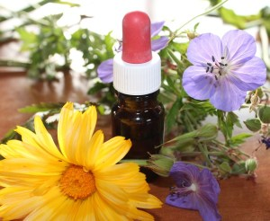 BACH Flower Remedies - flowers and tincture bottle