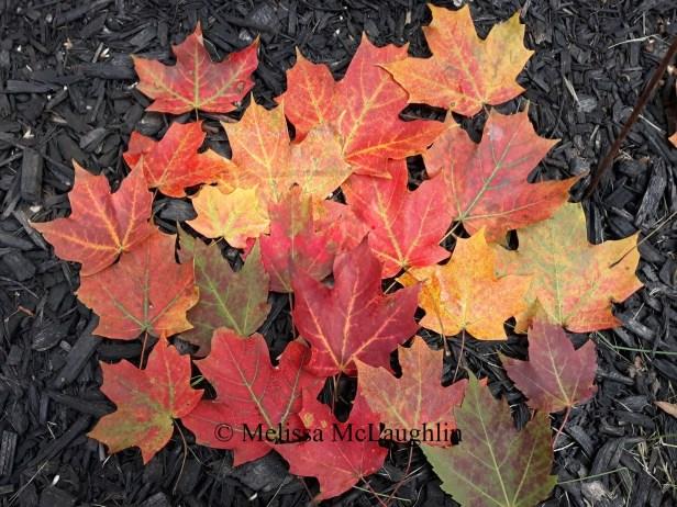 fall leaves 2018