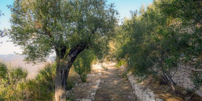 Christian Poem In the Garden of Gethsemane