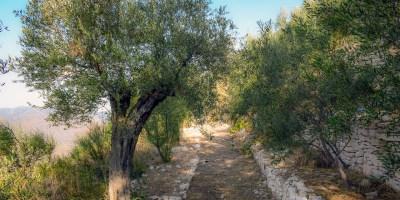 Christian Poem In the Garden of Gethsemane