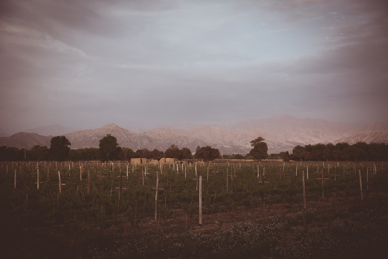 Winery Ica Peru Travel