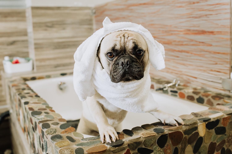 Solan Beach Dog Groomer