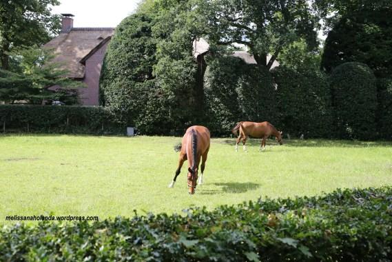 Cavalos na cidade de Blaricum na Holanda