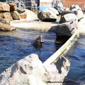 Dolphinarium na Holanda