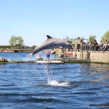 Passeio no Dolphinarium