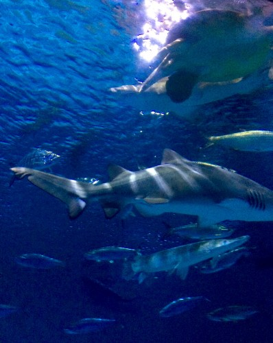 Ocean tank at Audubon Aquarium