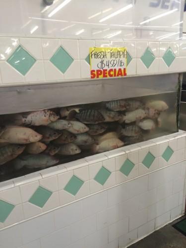 Tilapia at Hong Kong Market