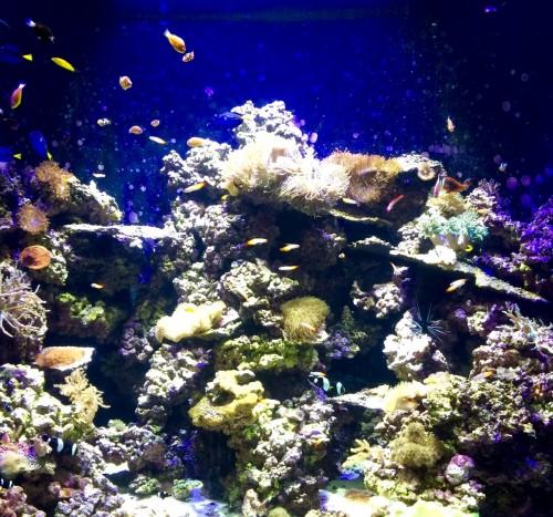 Audubon Aquarium tank