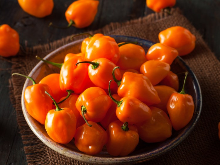 Raw Organic Orange Habanero Peppers