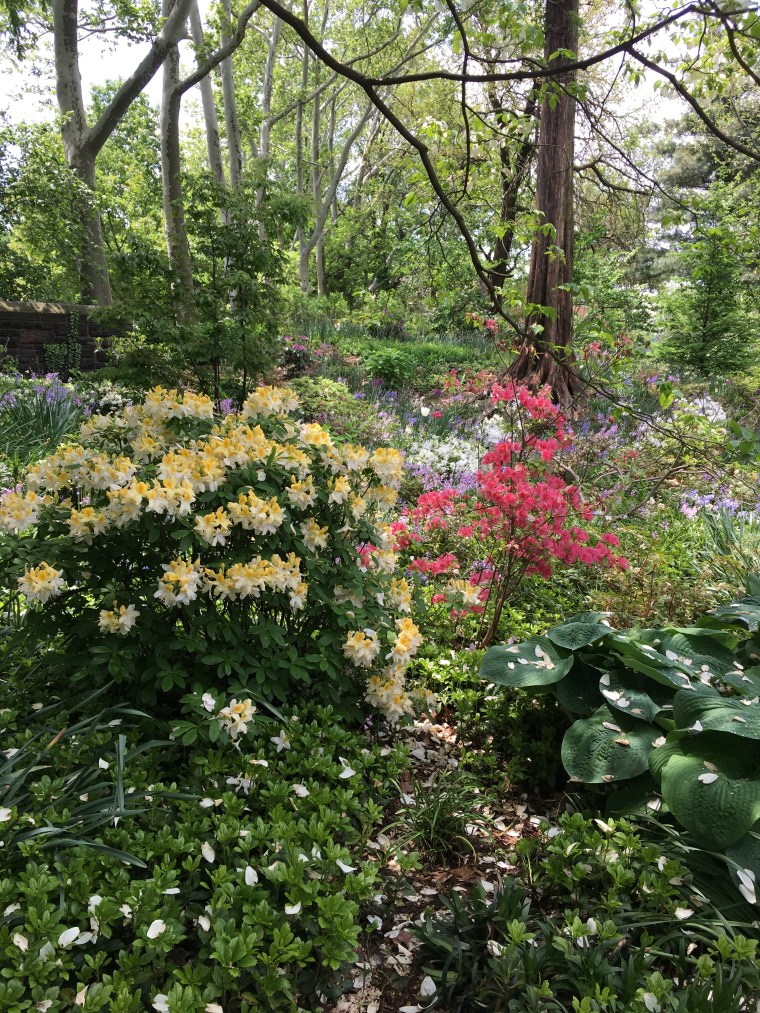 Heather Garden May 2018