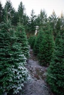 Macks Christmas Tree Hunt-3