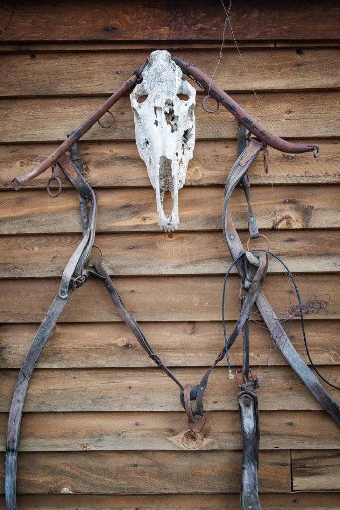 Cowboy Dinner Tree-91