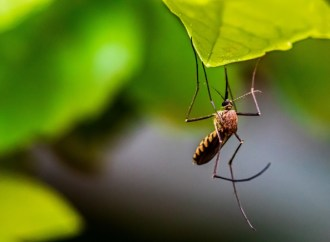 Kamplarda sivrisineklerden korunmak için öneriler