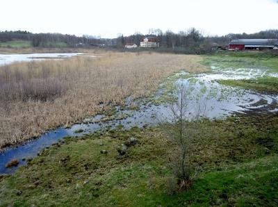 Ågestasjön, våtmark