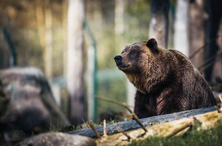 Ours à Melles