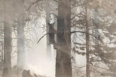 Ours pris au piège de l'incendie