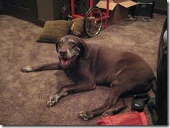 Michelle's Dog, Jake