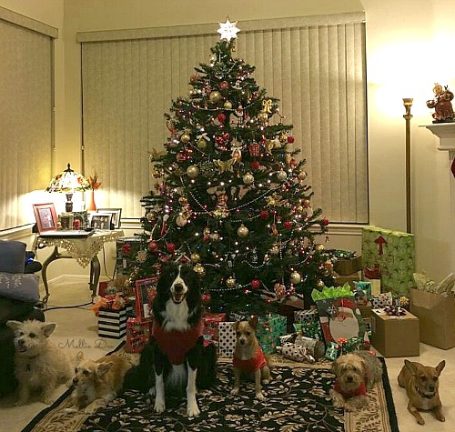 Christmas 2015 Puppies