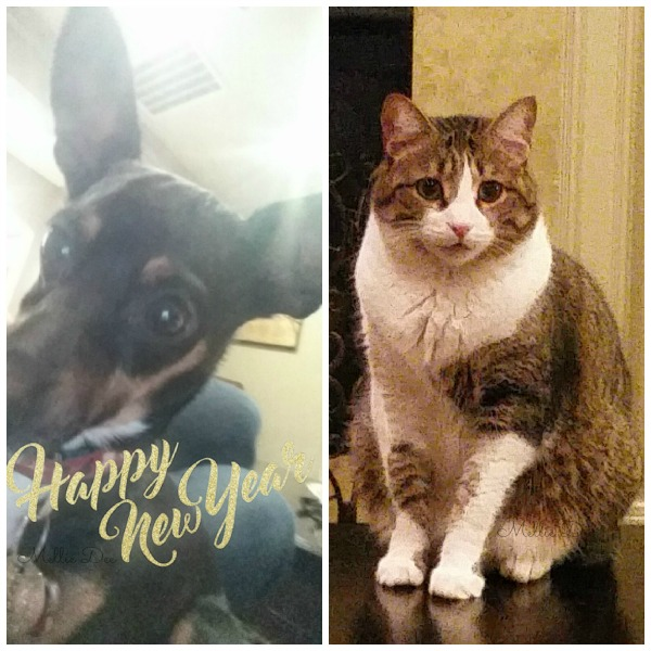 2017 New Years Eve   Riley & Dexter