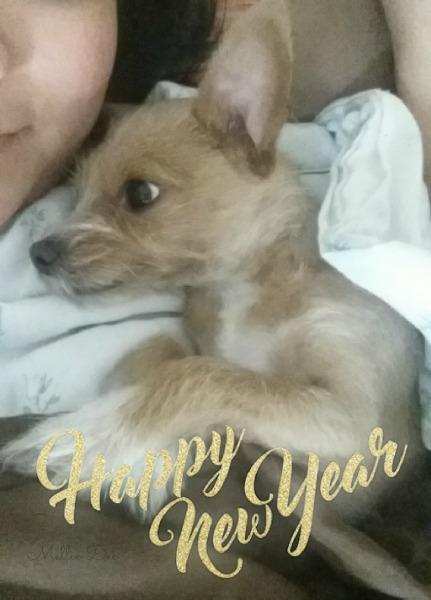 2017 New Years | Rizzo