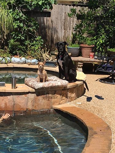 Pool Day | Rizzo & Luna