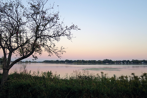 Lake | Madison, Wisconsin | Tree & Water