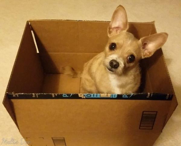 Rizzo In A Box