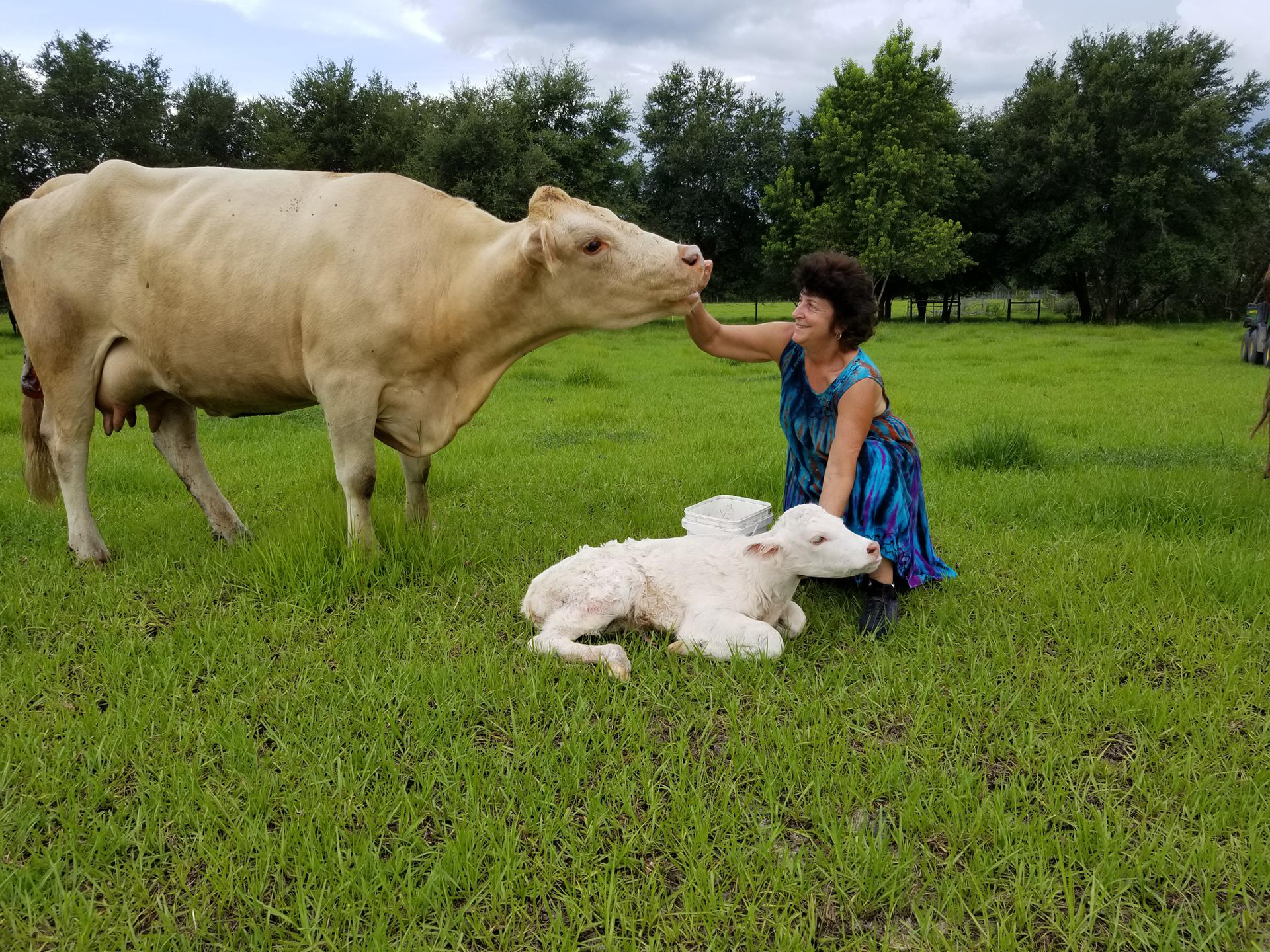 Lena with Calf July 2018
