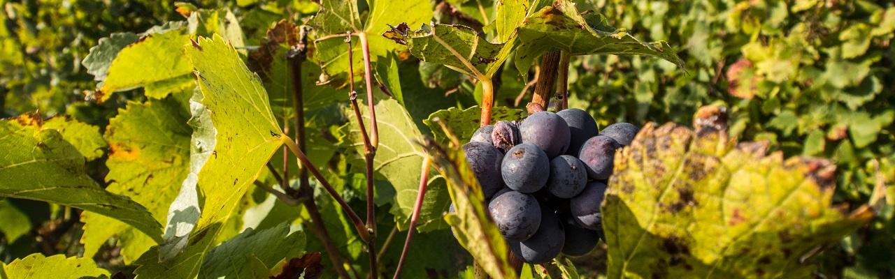 Beaune : de charité et de vignes
