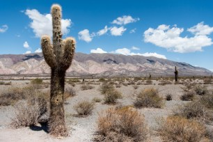"Parc national ""Los Cardones"""