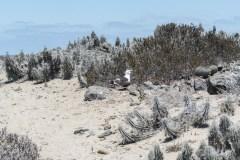 Chili, Réserve nationale des manchots de Humbolt : Isla Damas