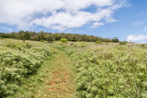 Sentier vers Orongo, guide Île de Pâques /Rapa Nui