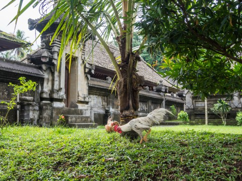 Village traditionnel de Penglipuran