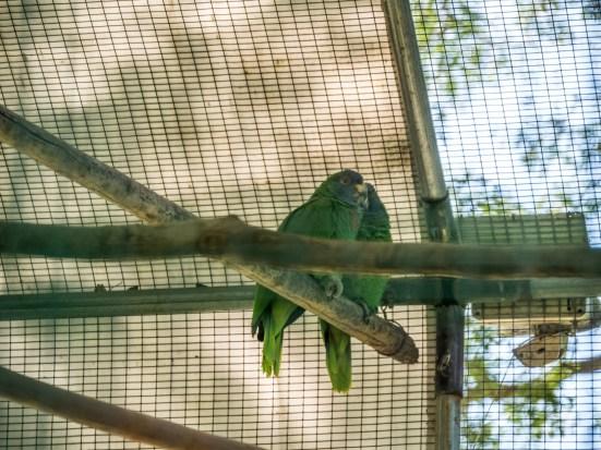 Jardin Botanique de Dominique, Roseau : couple de jacos