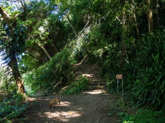 Jardin Botanique de Dominique, Roseau : Jack's Walk
