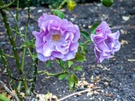 Jardin botanique, Christchurch