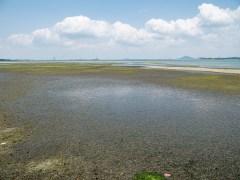 Pulau Ubin, Check Jawa