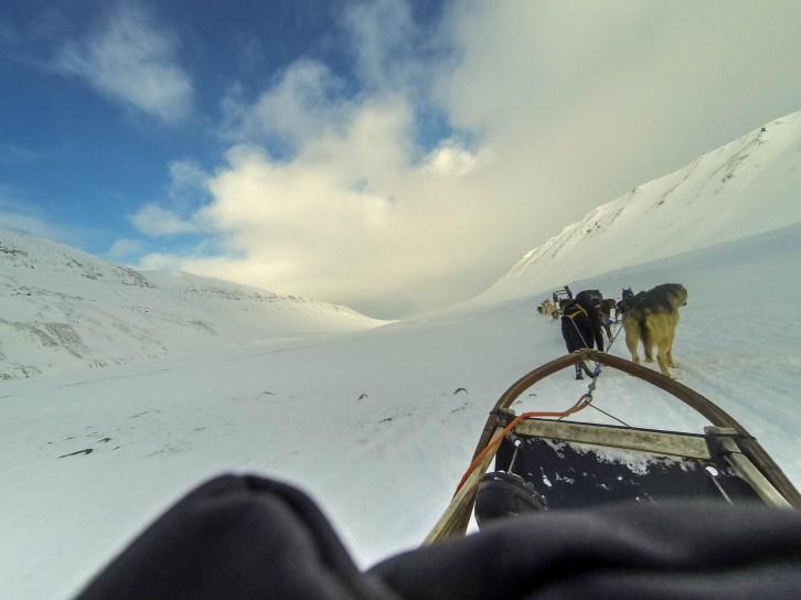 Chien de traîneau à Adventdalen