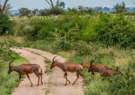 Queen Elizabeth National Park; Isihasha Sector