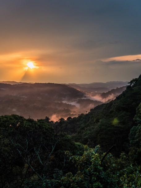 Bwindi Impenetrable Forest-18