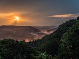 Bwindi Impenetrable Forest-19
