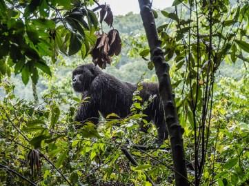 Bwindi Impenetrable Forest-31